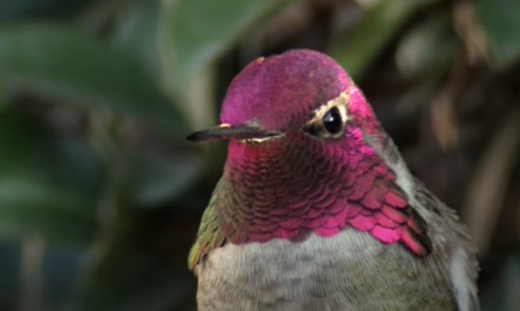 Hummingbird, Camera, colorful, magic, birds, animals, nature, beauty,