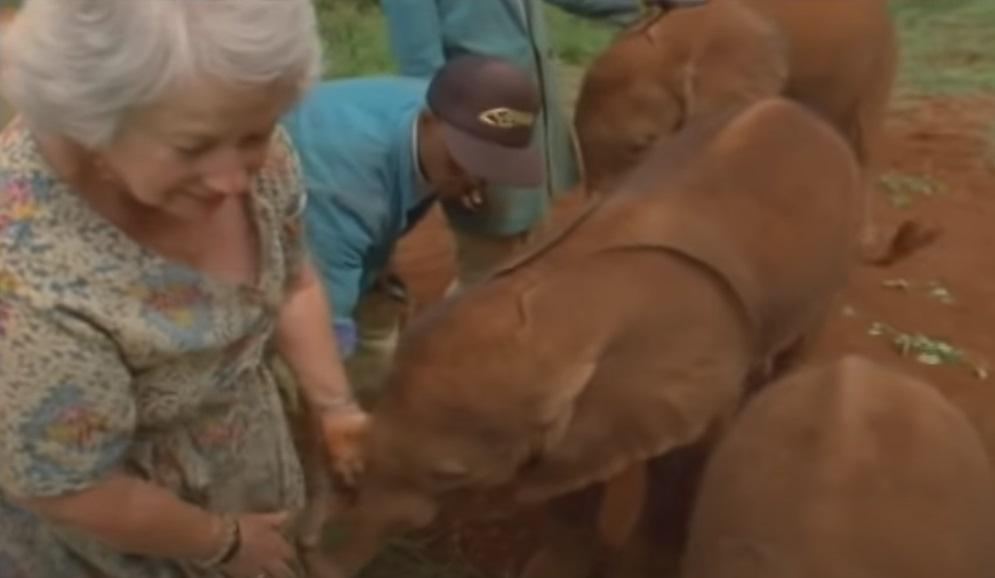Elephant, Story, Wildlife, Animals, Lady, Heroes,