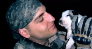 Dogs, adoption, heartbroken, Story, Miracle, Puppies,