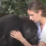 She grows up with two gorillas