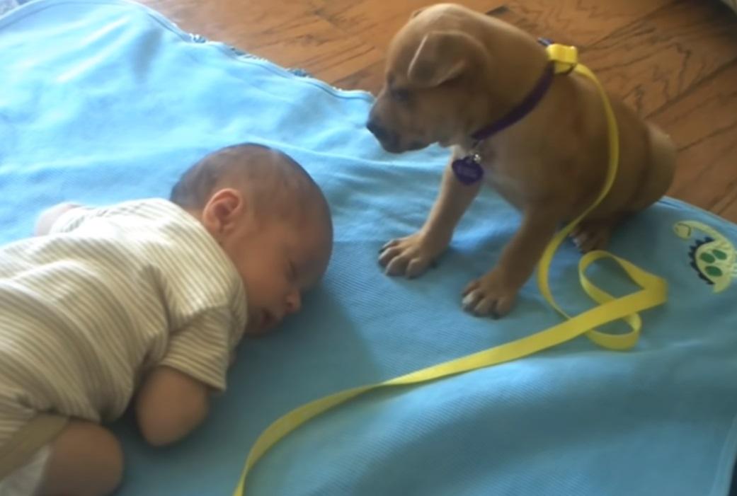 Dogs, Puppies, Adorable, Babies, sleeping, animals, babysitting,