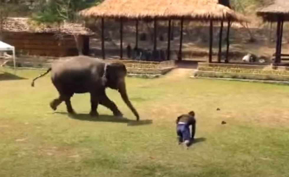 Elephants, Rescue, Animals, Friends, Love, Smart, Adorable,
