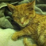 Frozen cat miraculously get a new life