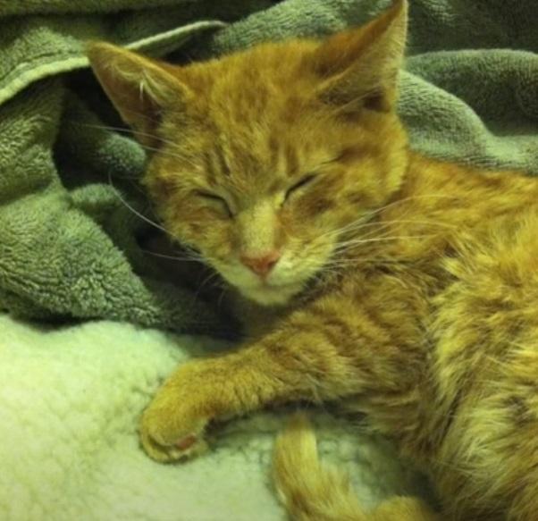 cat, story, rescue, animals, pet, adorable,