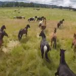 She gave freedom to more than 200 horses