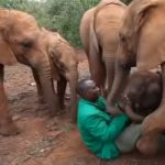 Orphaned Baby Elephant get a new family