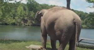 Elephant, animals, story, love, Oprah, friendship,