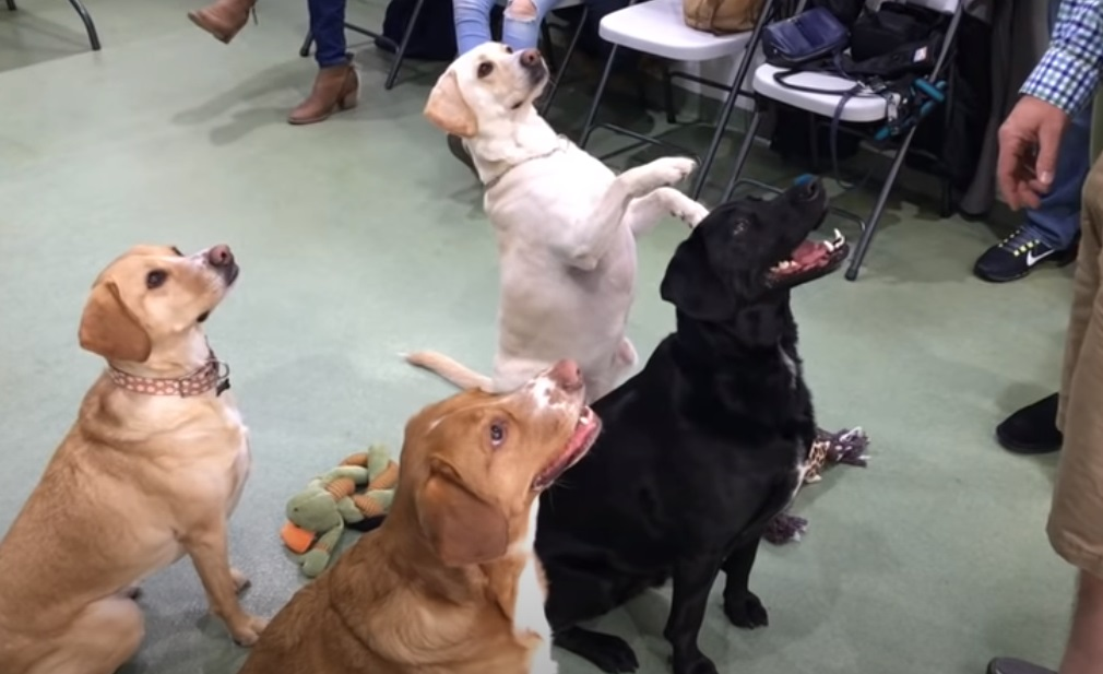 Dogs, animals, puppies, story, friends, adoption,