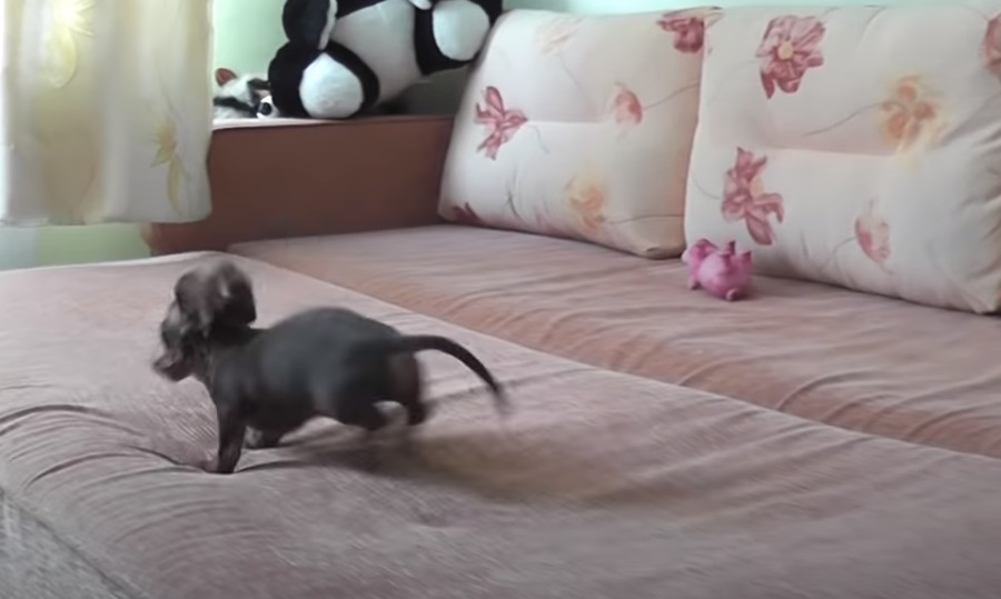 Puppies, Dogs, Bed, Playing, Animals, adorable,