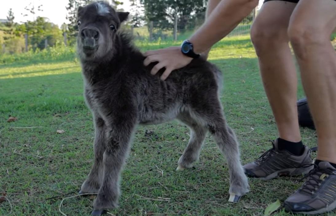 Miniature, Horse, babies, Animals, Adorable, Cute,