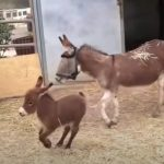 Adorable Baby Donkey
