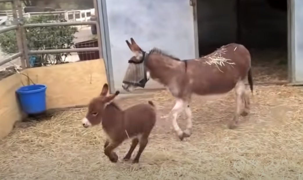 Adorable ,Babies, Donkey, farm, animals, Cute,