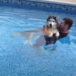 Husky Water Therapy