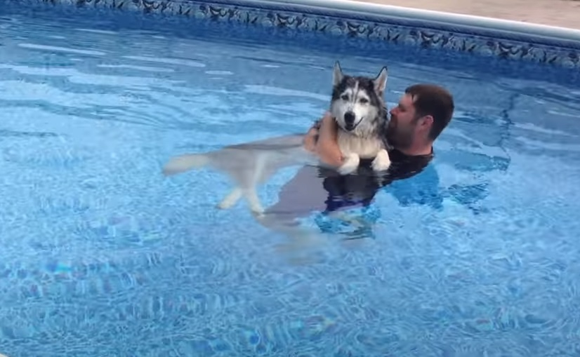 Pool, Cure, Therapy, Dogs, Husky, Animals,