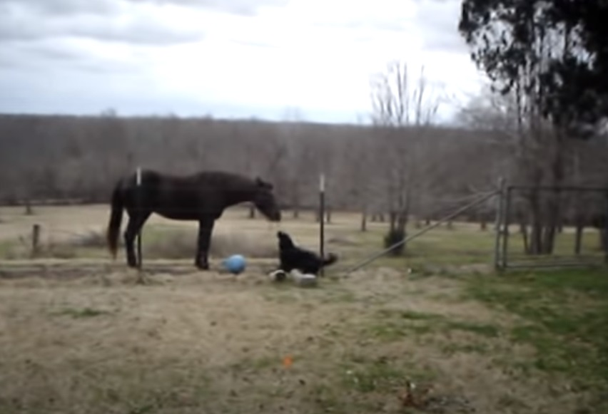 Animals, Friends, horses, Dogs, amazing, Playing, Happy,