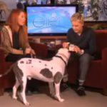 dog, guest, Ellen, Show, Pitbull, animals,