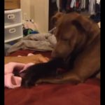 Introduce a Homeless Kitten To His Pit Bull
