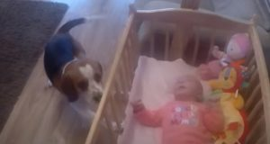 baby, dog, crib, adorable, animals, trending,