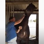 Lovely Horse get petted on the neck