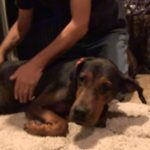 Abused Dog finally adopted
