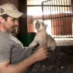 A Lioness and owner Celebrates new babies