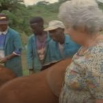 Phenomenal lady adopts Orphan Elephants