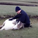 Pony and foal rescue