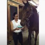 Horse, Animals, Birthday, Cake, Funny, Adorable,
