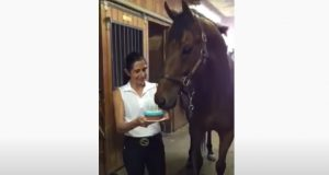 Horse, Animals, Birthday, Cake, Funny, Adorable,