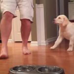Puppy, Bowl, dinner, praying, adorable, animals, dogs,