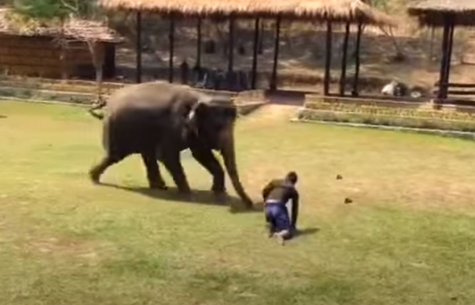 Elephants, Rescue, Animals, Friends, Love, Smart, Adorable,