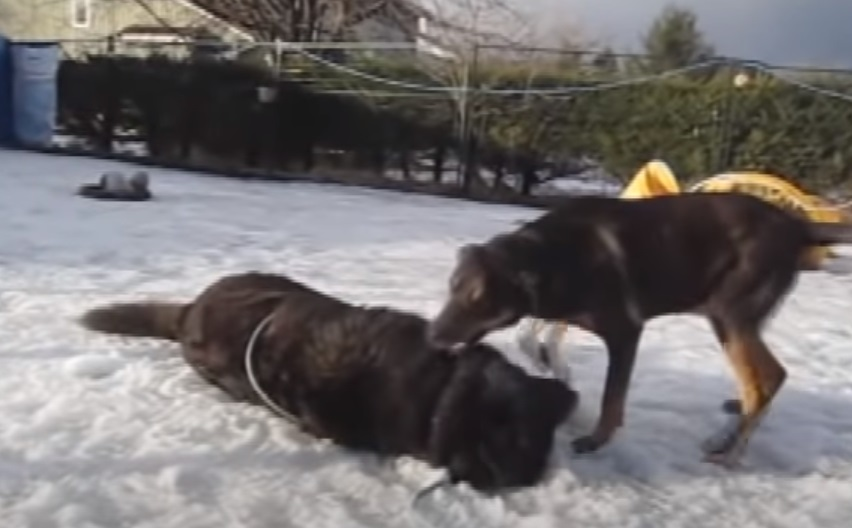 Dogs, Freezing, Winter, Chained, Story, Rescue,