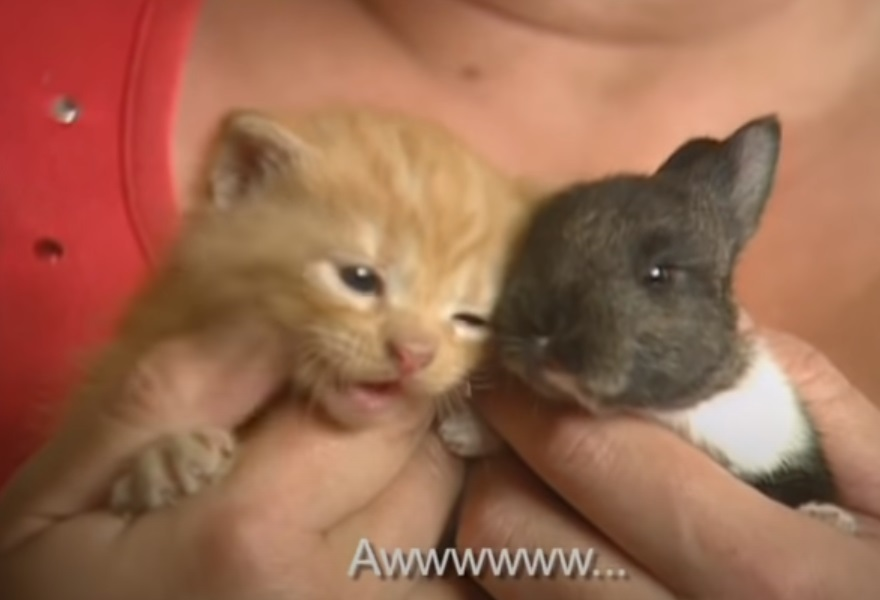 Cat, adoption, Baby, Rabbit, animals, pets,