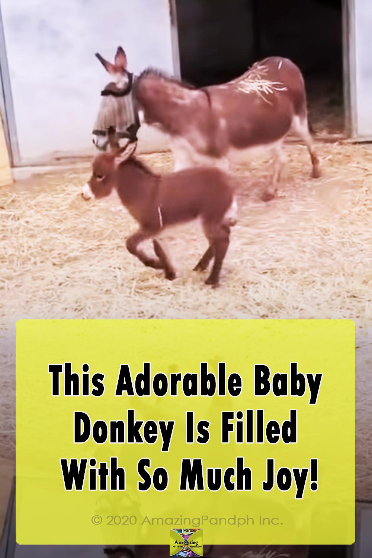 Adorable ,Babies, Donkey, farm, animals, Cute,