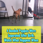 After 4 Years this Puppy Reunion will melt your Heart
