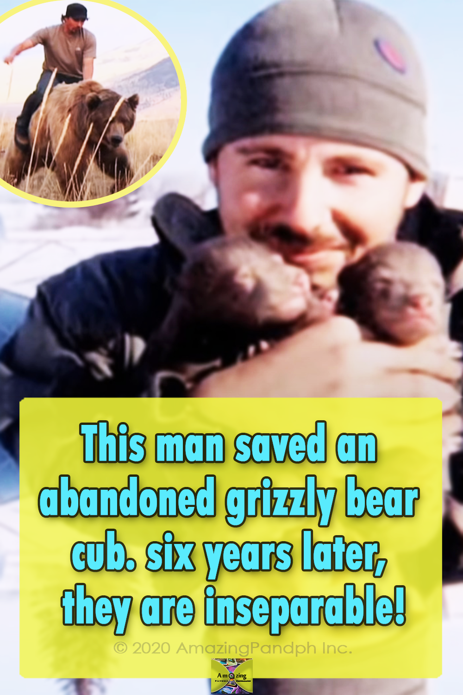 Story, Wildlife, Bear, Friendship, Animals, Story,