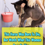 Baby horses with a special need
