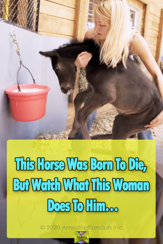Animals, Horses, Farm, Racing, Babies, Ponies, ranch,