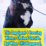 Best Rescue Story for a frozen Stray dog