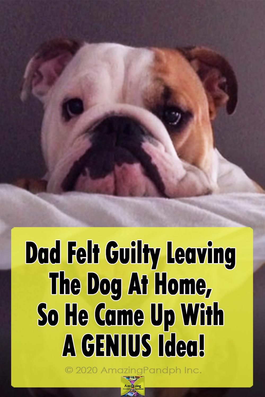 dog, home, adoption, invention, Story, Adorable,