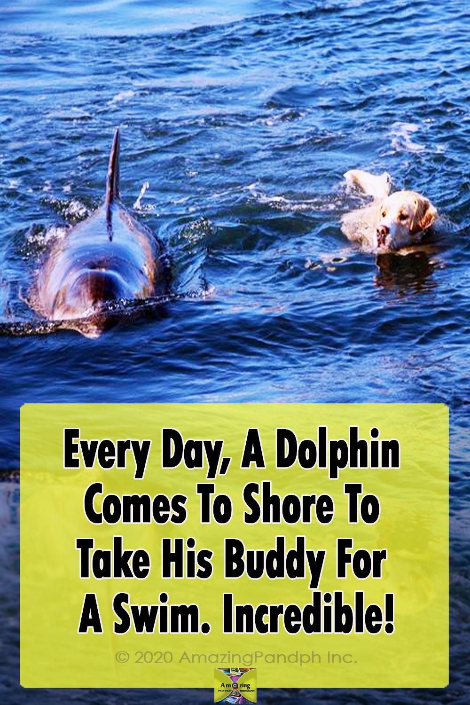 Dolphin, Shore, Swim, dogs, Island, Animals, friends,