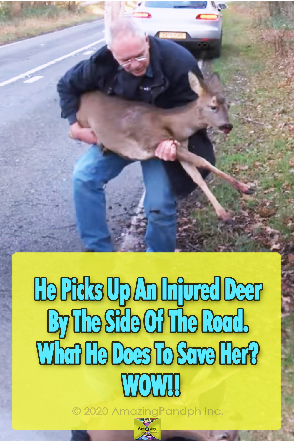 rescue, animals, deer, road, accident, save life,