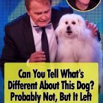 Hilarious Talking and Singing Dog Wendy