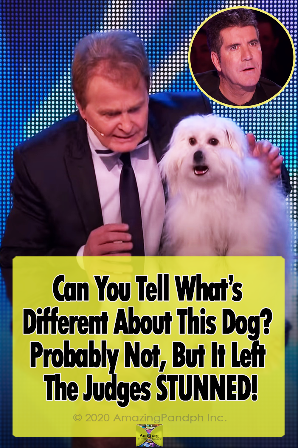 Dogs, BGT, Talent, Hilarious, Talking Animals, Animals,