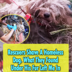 Homeless Dog get a shave for the first time