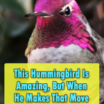 Hummingbird Looks At The Camera