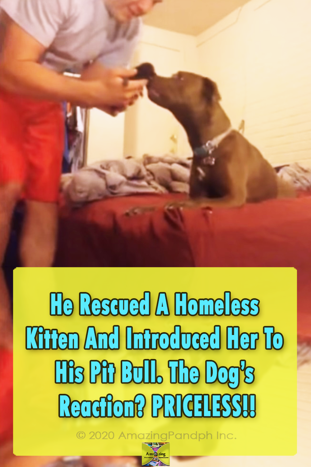 adoption, cats, dogs, kittens, pitbull, adorable,