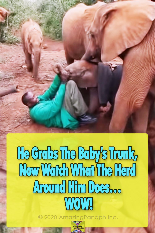 elephant, animals, rescue, story, sweet, babies,