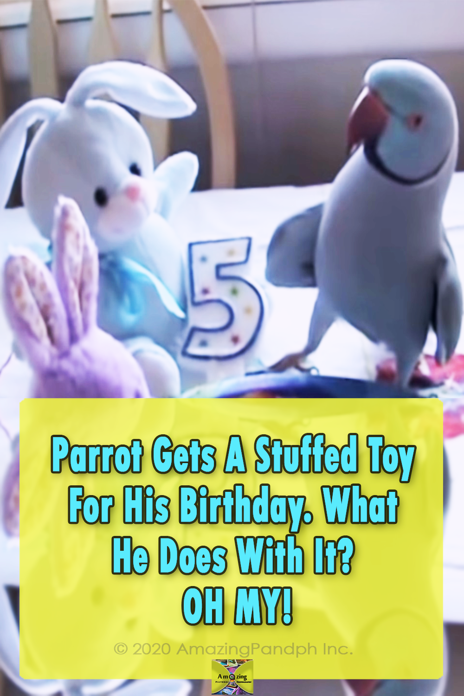 Parrot, birds, animals, funny, birthday, adorable,