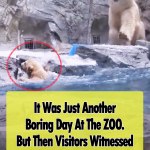 Polar Bear cub can't swim